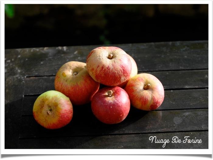 Pudding aux pommes et à la crème