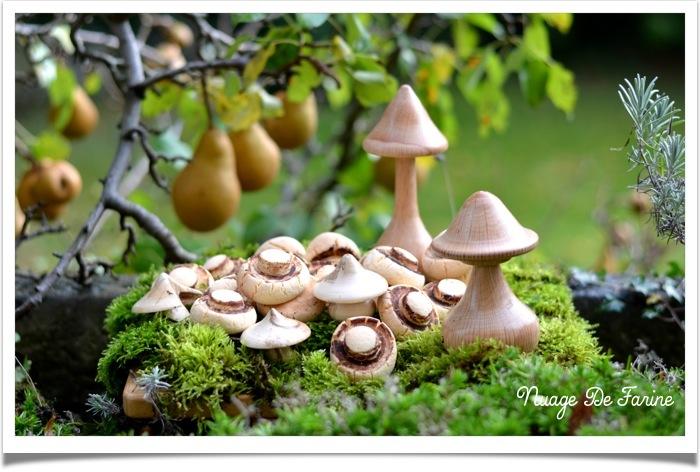 Les champignons qui se prenaient pour des biscuits….